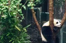 熊猫基地三星堆 一日游 参加了旅行社 很方便 中午还在广汉吃了一顿农家乐 很好的选择 在卫生间看到了