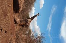 肯尼亚~安博塞利国家公园,早上七点开门,赶着开门去的,逛到下午三点钟,里面餐厅的午饭特别贵,自带午餐