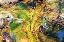软泥上的青荇,油油的在水底招摇。