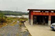 郴州资兴市文昌阁这边,东江格林生态农业园,葡萄熟了。各人根据自己的喜爱,选择自由采摘,一边采摘一边品