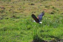 马赛马拉的自然动物保护区,啥也不说了,一辈子至少要去一次的地方,温习一下动物世界。