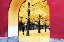 中山公园,古建筑加银杏树,有一种令人震撼的美!