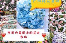 随便就能到达の亲民の广州岭南花卉市场 自从去过一次岭南花卉市场,某鲨我就再没有入过花店了 停好车,队