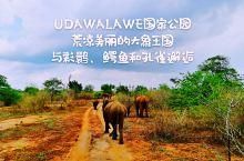 如果你最喜欢的动物是大象,那么你在锡兰不用去其它地方,UDAWALAWE国家公园就足够了。 许多人向