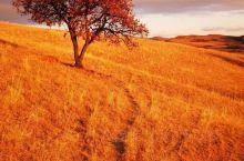 深秋的乌兰布统虽然木叶几近落光,风景却别有一番味道 好比一位美女 虽然徐娘半老 然而风韵犹存 面容会