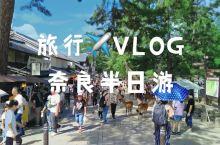 #vlog##日本##奈良#终于近距离和小鹿接触了一回,下山的的路上还被搭讪了