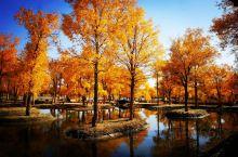 秋韵一酒泉金塔胡杨林景区  每年秋天都要情不自禁去河西走廊,感受浓浓的秋,感受胡杨的美和顽强的生命力