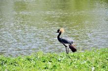 关关雎鸠,在河之洲