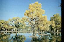 金色金塔,最美胡杨,秋天这里是旅游的天堂。如果你爱一个人,就带他来金塔胡杨林吧,这里有秋天最美景色
