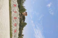 延津县森林公园