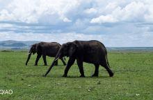 专业玩家和野生动物摄影的好地方——马赛马拉国家野生动物保护区:该保护区位于肯尼亚西南部,与坦桑尼亚最