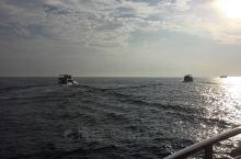 在斯里兰卡清晨乘出海去看和,我们很幸运,去的早坐在第一排,看到了喷水,甩尾巴,看到了跳跃,50美刀很