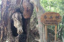 【景点攻略】戈壁明珠-天山神木园 详细地址:神木园位于新疆阿克苏温宿县城西北60公里处  交通攻略: