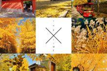 找寻北京的红黄蓝灰~ 红红的枫叶,黄黄的银杏,蓝蓝的天空,那抹灰色的圆明园,都是此时此刻进京的收货,