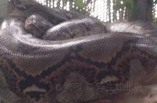 泰国,大蛇