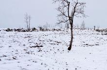 初春白雪,覆皑山野。  雪里行,雪中情!  抗疫共守,祈待花开。……  冬日已离去,春天在走近,雪落