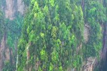 张家界百天梯 百龙天梯位于世界自然遗产张家界武陵源风景名胜区内,由北京百龙绿色科技企业总公司、英国佛