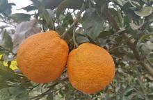 朋友家的水果