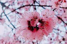 阳春三月,春暖花开,属于这个季节的美好也会如约而至哦!