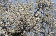 喜欢山野中春天,它不为炫耀而来,自我绽放,纯粹而美丽。