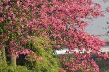 《来自杞县的诱惑:我真的想要去旅游……》  我是孤独浪子,希望我的拍拍让您有所收获。 漫游神州31载
