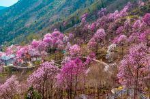 宅家一月余,心里最渴望的就是放飞。春来不看花,便辜负了这个春天。后疫情时期不便出国,最宜解锁国内小众