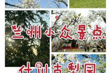 """什川梨园在位于甘肃兰州东北方向有一个被誉为""""世外梨园""""的古镇——什川。 什川镇位于兰州东北部约20公"""