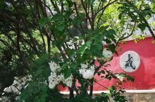 花开遍地戒台寺