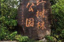 罗源江树林公园。红树林在海堤外,面积虽小但却是福州周边一个网红点。来打个卡。