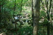 松阳·丽水    原始三林,爬山玩水,此生之美事