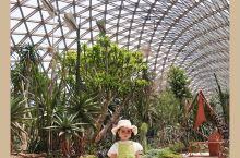 辰山植物园的温室展览馆开放啦 我们又双叒来野餐了我对辰山的爱就缺一张年卡来表达了据说大概、可能、或许