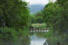 古堰画乡,瓯江两岸的泼墨山水,岸边临水民居,像极了周杰伦的青花瓷歌词,帘外芭蕉惹骤雨门环惹铜绿,而我