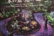 """""""水之道,光之道""""!夜游宇部市常盘植物园。以""""周游世界、感动世界的植物馆""""为理念,以原产地的植被观念"""