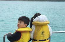 今天观鲸,还幸运的看到了海豚宝宝