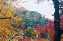 香岚溪是日本东海地区第一红叶胜地,参荣禅师参读一卷《般若心经》后,即亲植一株红叶树于香岚溪畔。其后人