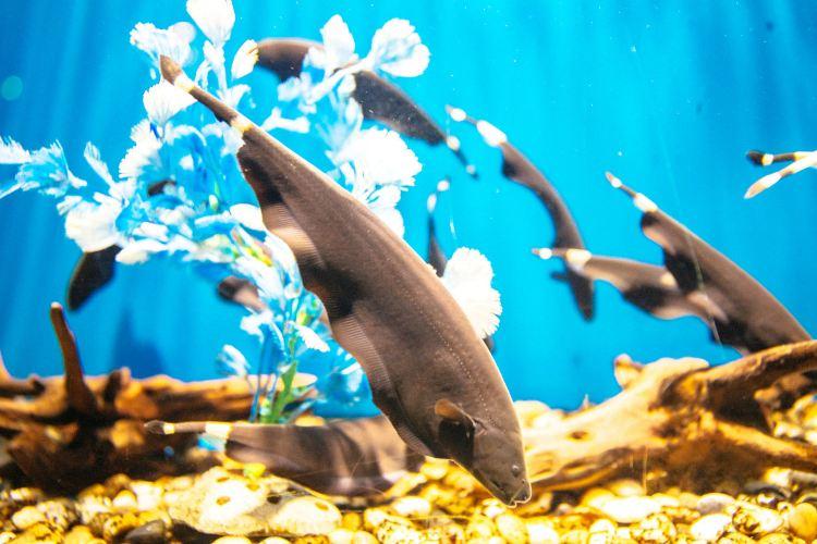 Liaocheng Underwater World4