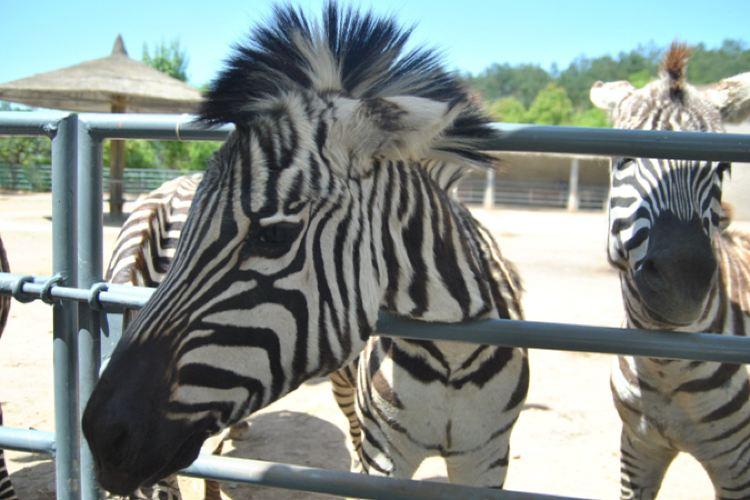 Feizhou Zoo3