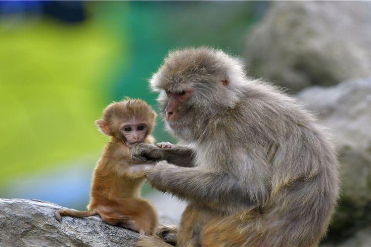 구이저우 삼림 야생동물원1