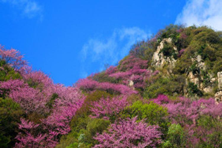태평국가삼림공원1