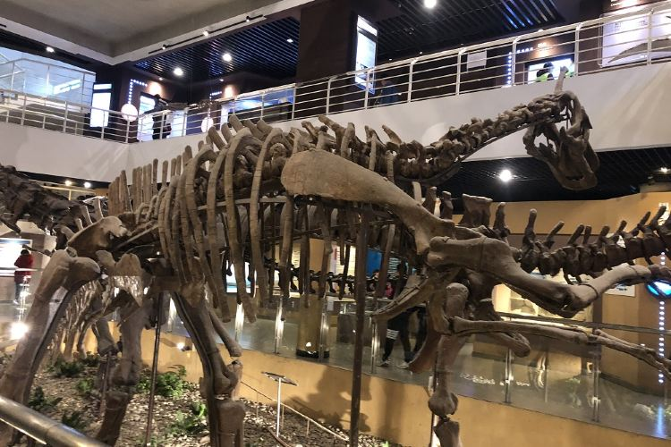 The Paleozoological Museum of China4