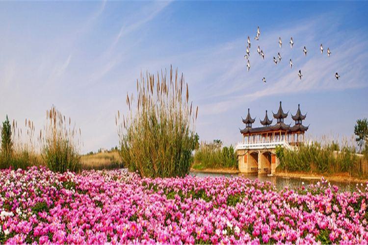 Sihong Hongze Lake Wetland4