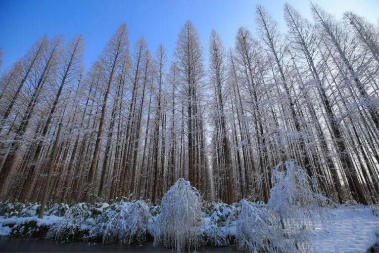 Baoyinghu National Wetland Park3