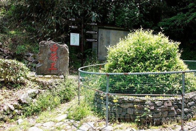 九龍峽景區4