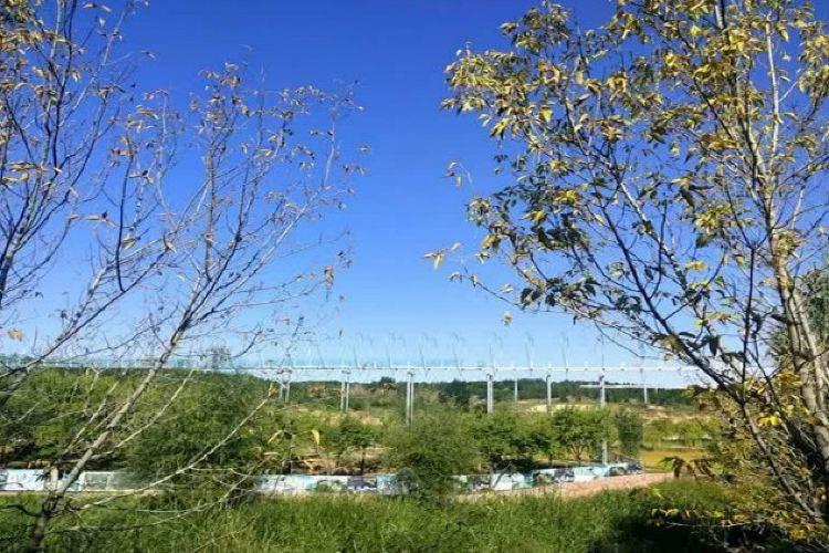 鄂爾多斯植物園1