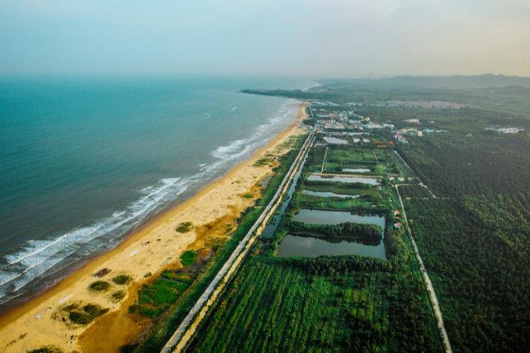 Rizhao Seaside National Forest Park3