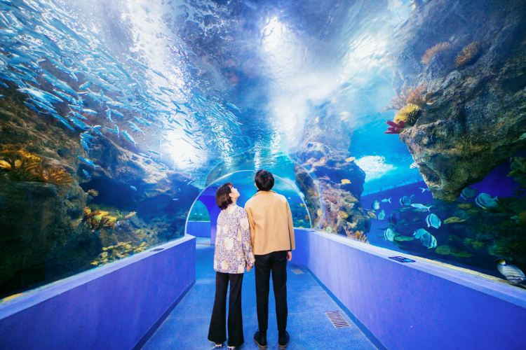 Liaocheng Underwater World2