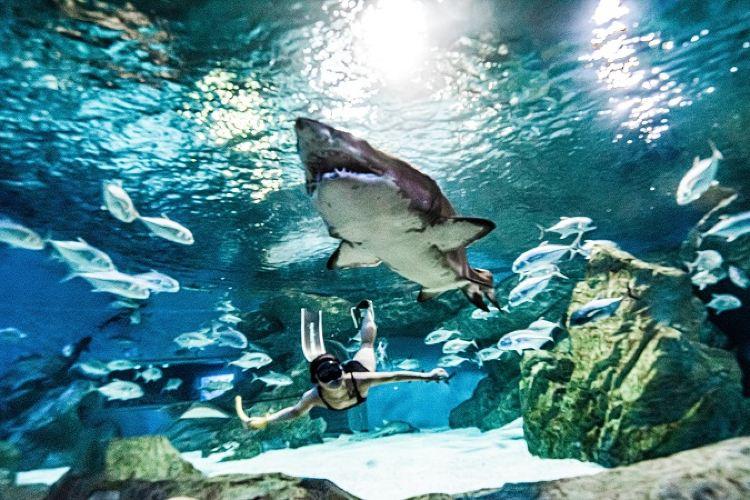 成都海昌極地海洋公園3