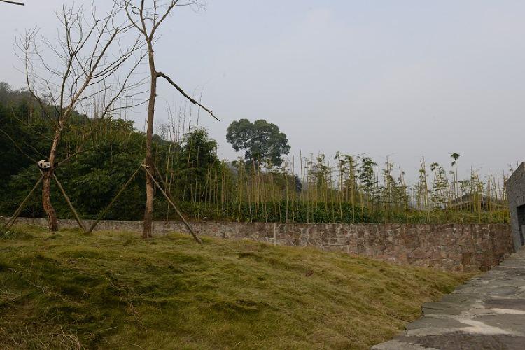 중국 자이언트판다 보호연구센터, 두장옌기지3