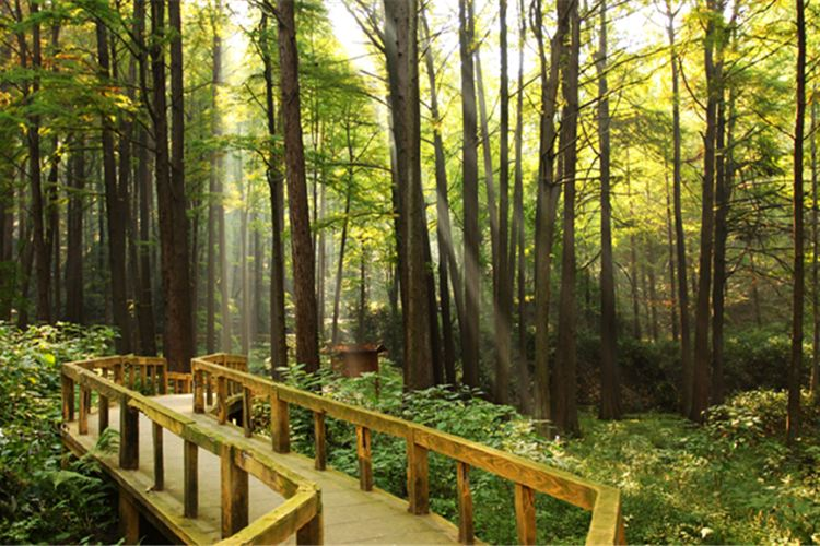 보얼덩산림공원2