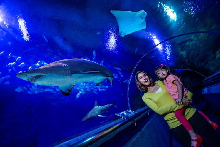 吉隆坡城中城水族館1